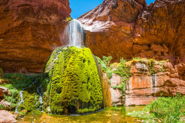 Grand Canyon Ribbon Falls green oasis on Kaibab Trail Arizona Waterfall cascading over the rocky rim of the Bright Angel Canyon into the mossy green oasis of Ribbon Falls deep in the desert wilderness of the Grand Canyon National Park, Arizona, USA. cottonwood tree stock pictures, royalty-free photos & images