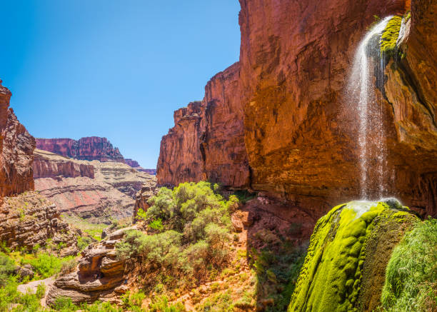 Grand Canyon Ribbon Falls green oasis waterfall Kaibab Trail Arizona The cool clear water of Ribbon Falls cascading into its green mossy oasis hidden on the North Kaibab Trail of the Grand Canyon National Park, Arizona, USA. cottonwood tree stock pictures, royalty-free photos & images