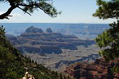 Grand Canyon view between trees