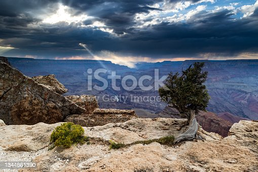 istock Grand Canyon viewpoint. Tree in foreground. Clouds and thunderstorm; rays of light. 1344661390