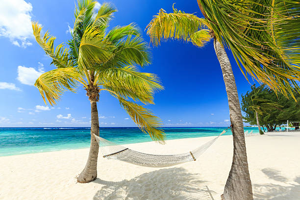 Grand Cayman, Cayman Islands Hammock and palm trees at 7 mile beach, Grand Cayman caiman stock pictures, royalty-free photos & images