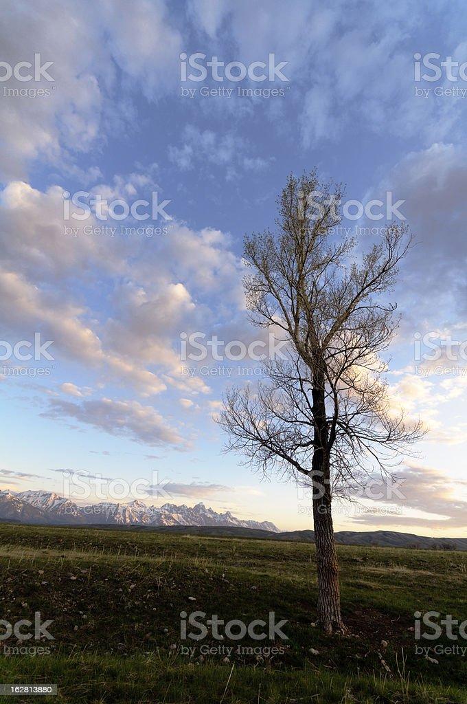 Grand Teton at dawn royalty-free stock photo
