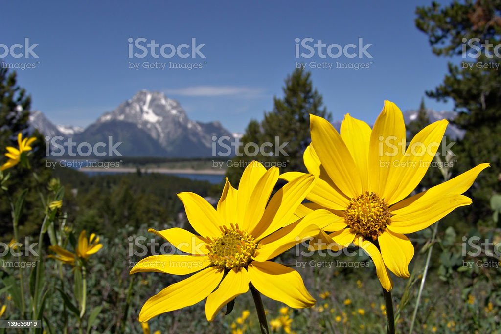 grand tetons in the spring royalty-free stock photo