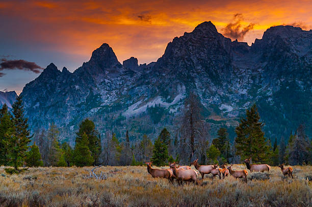 Grand Tetons Landscape stock photo