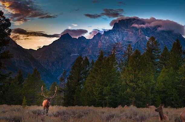 Grand Tetons Landschaft – Foto