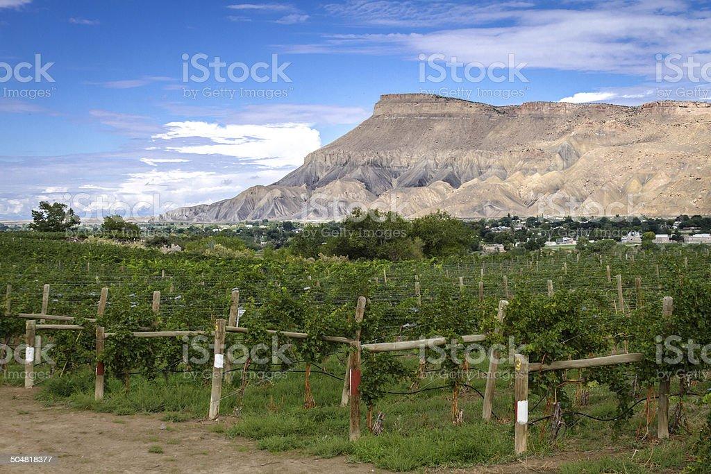 Grand Valley stock photo