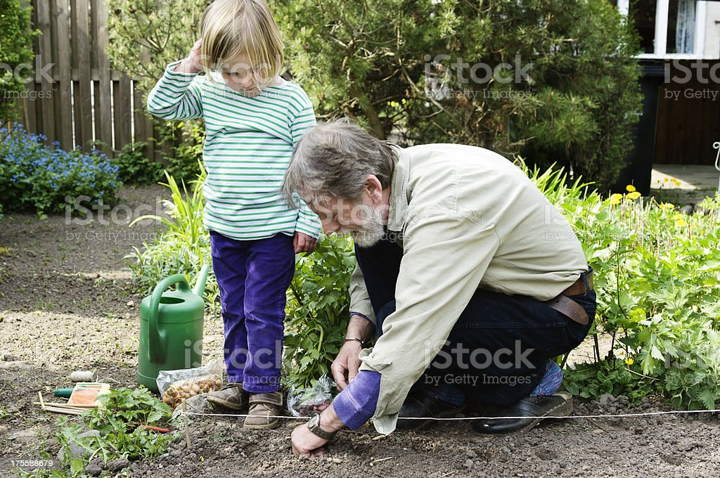 Grandfather and Grandchildren Gardening Together. royalty-free stock photo
