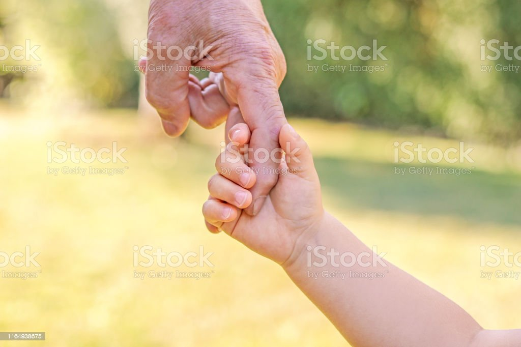 Grandfather and grandson holding hands. Little child hand holding big...
