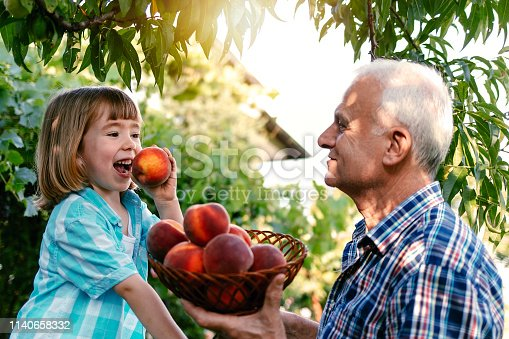 Grandfather and grandson picking peaches