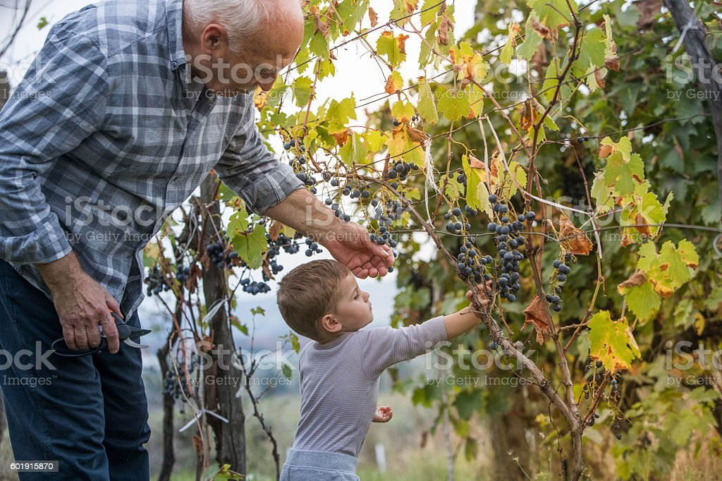 Grandfather and grandson stock photo