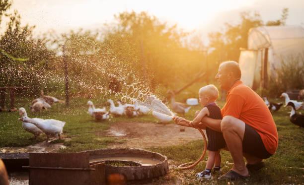 großvater und enkel spielen mit wasserschlauch in einem hinterhof einer farm der tiere. spaß an einem sommertag. - senior bilder wasser stock-fotos und bilder