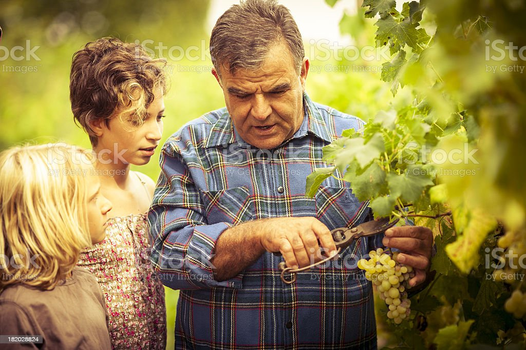 Grandfather and his grandchildren in vineyard stock photo