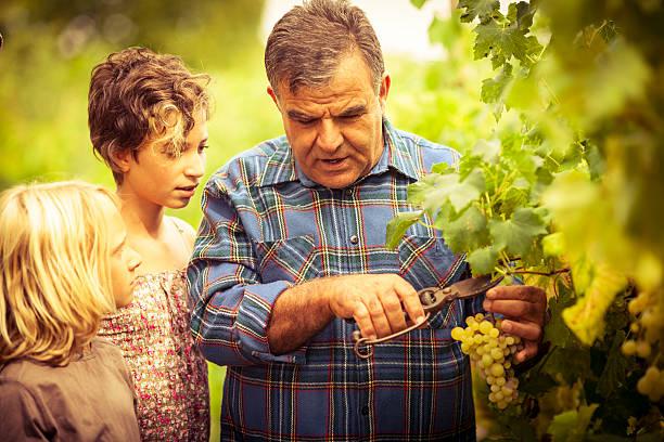 Großvater und sein Enkel in vineyard – Foto