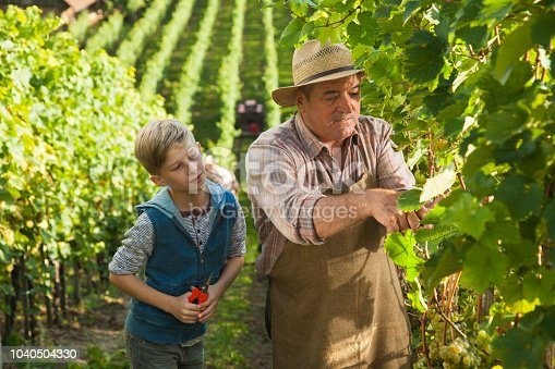 540524550 istock photo Grandfather and his grandson in vineyard 1040504330