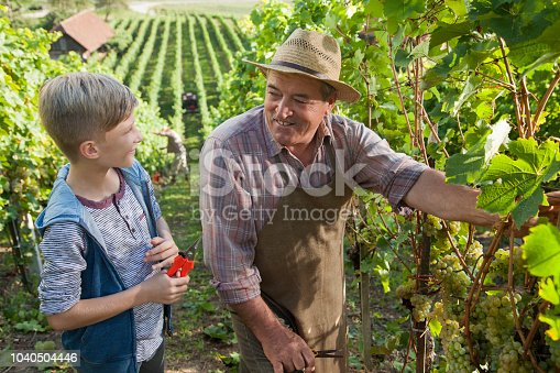 540524550 istock photo Grandfather and his grandson in vineyard 1040504446