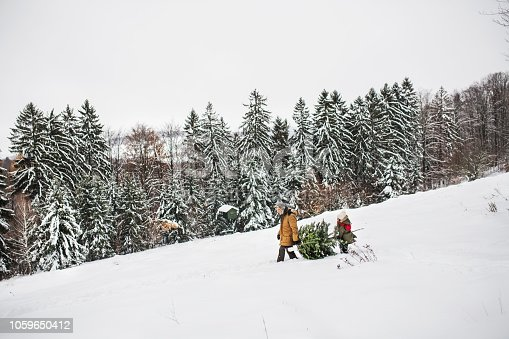 Grandfather and a small girl getting a Christmas tree in forest. Winter day.