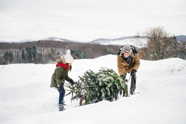 großvater und kleine mädchen, das einen weihnachtsbaum im wald. - alte weihnachtsbäume stock-fotos und bilder