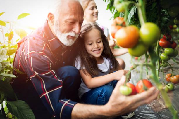 Großvater Anbau von Bio-Gemüse mit Enkelkindern und Familie auf dem Bauernhof – Foto