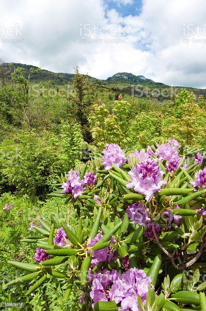Grandfather Mountain royalty-free stock photo
