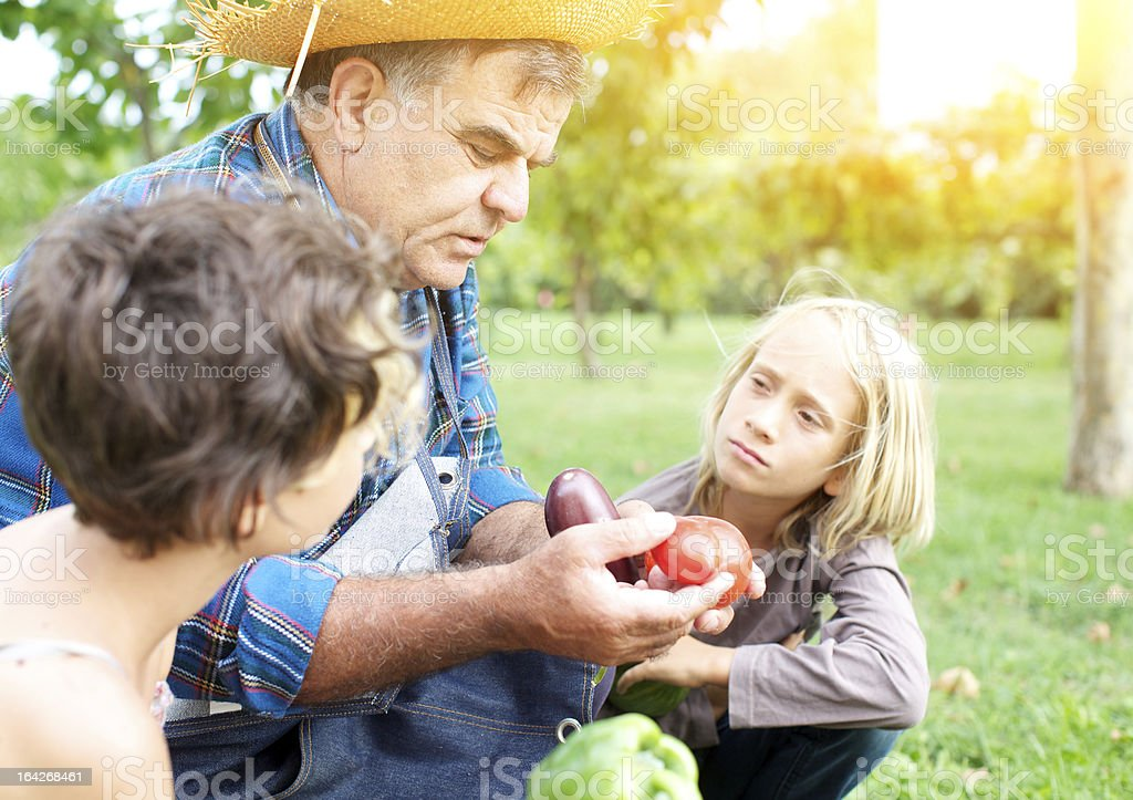 Grandfather shows the products of vegetable garden to grandsons royalty-free stock photo