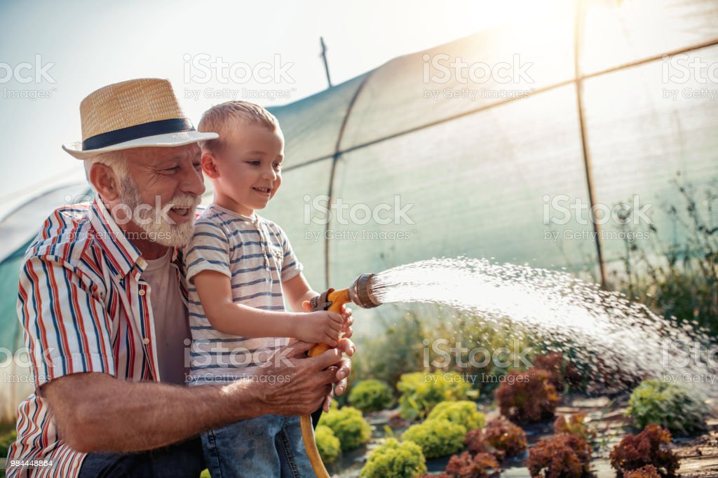 Grandfather with his grandson working in the garden stock photo
