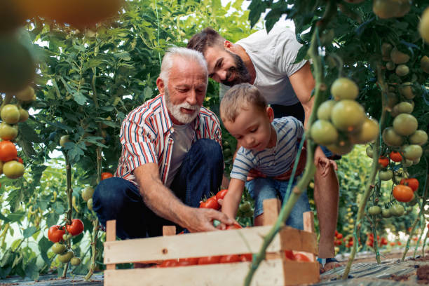 grandfather,son and grandson working in greenhouse - activity stock pictures, royalty-free photos & images