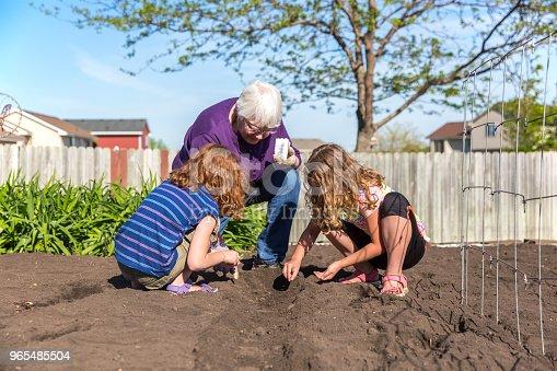 istock Grandma & Granddaughters Planting Green Beans in Garden 965485504