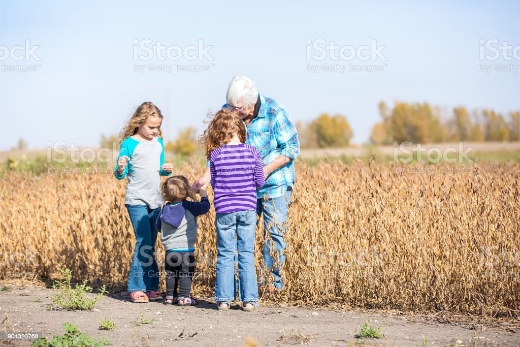 Grandma & Grandkids Looking at Soybeans in Field stock photo