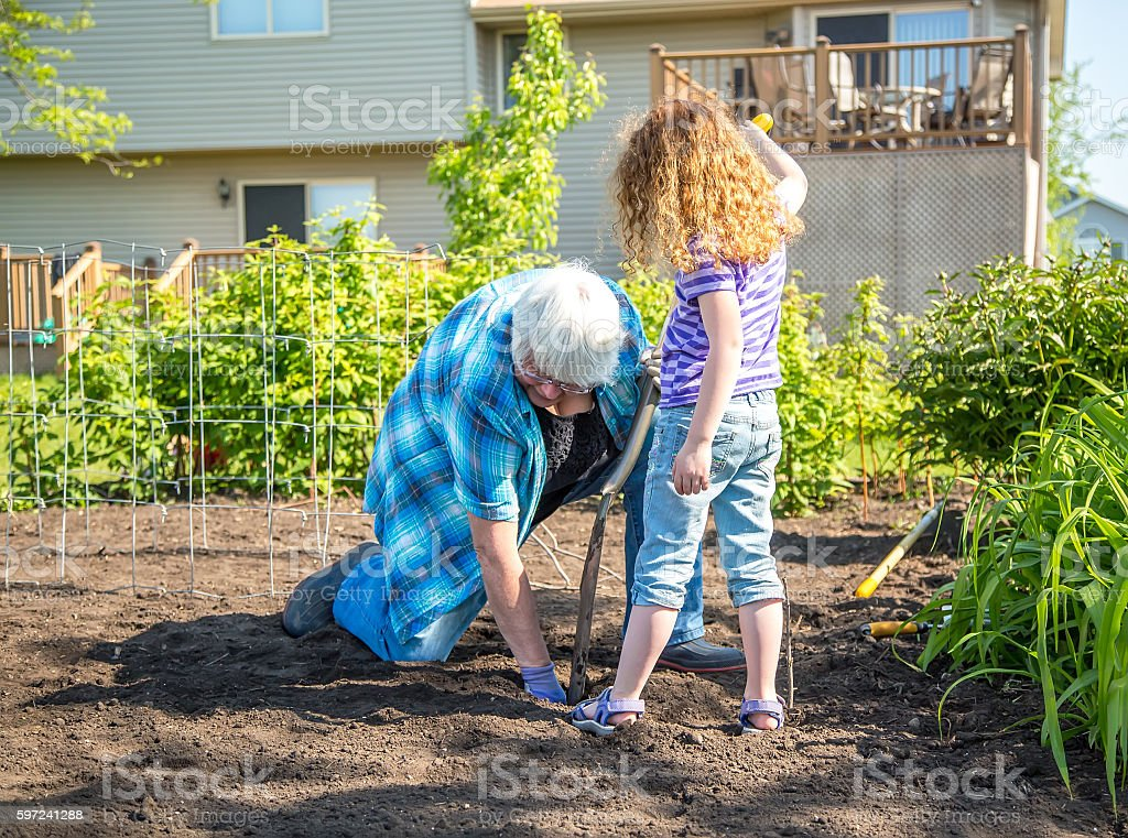 Grandma U0026 Young Girl Planting Potatoes In Garden Royalty Free Stock Photo