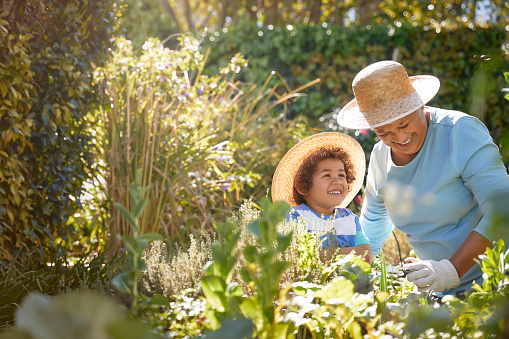 African descent grandmother and grandchild gardening in outdoor vegetable garden in spring or summer season. Cute little boy enjoys planting new flowers and vegetable plants.