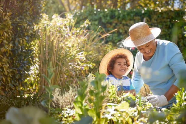 avó e jardinagem infantil ao ar livre - jardinagem - fotografias e filmes do acervo