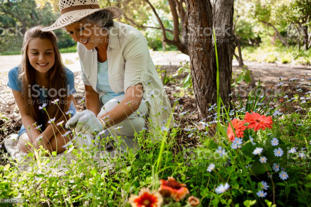 Grandmother and granddaughter gardening together royalty-free stock photo
