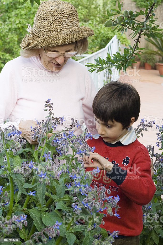 Grandmother and Grandson Looking at Plant Sage royalty-free stock photo