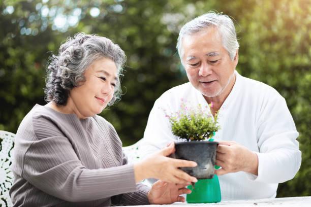 祖母は祖父が植物の世話をするのを手伝う。 - 家族 日本人 ストックフォトと画像