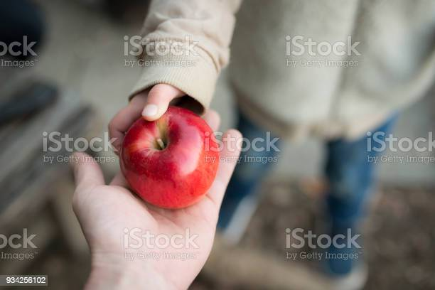 Grandmother to give the apple to granddaughter picture id934256102?b=1&k=6&m=934256102&s=612x612&h=q6kut67ayishqdogapsljkpp42mkq7iiwn1rzm o j4=