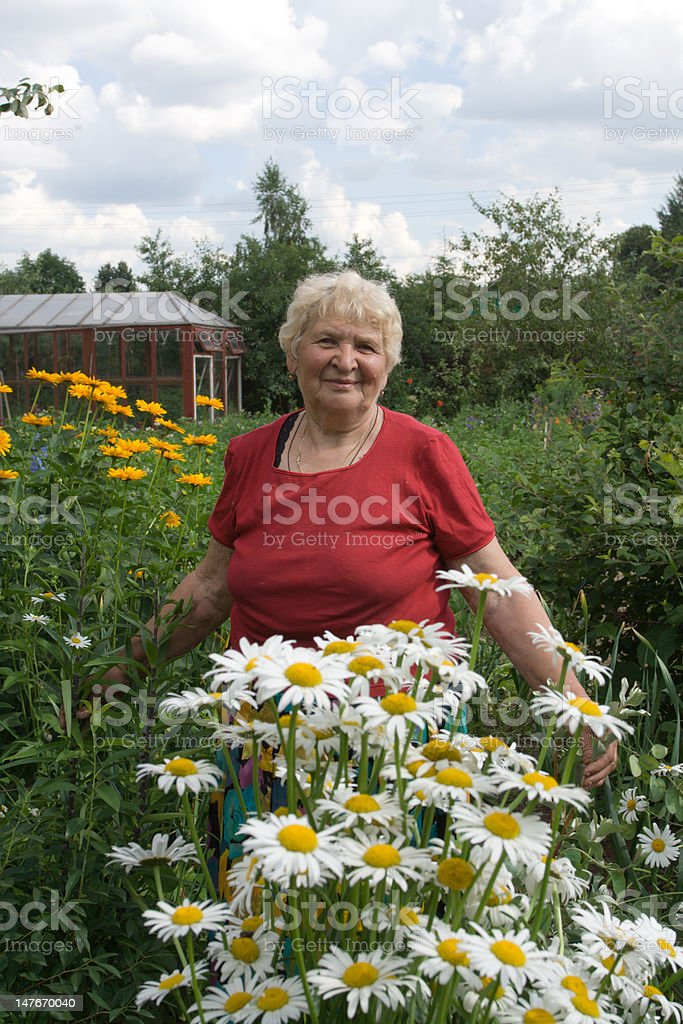 Grandmother with camomiles royalty-free stock photo