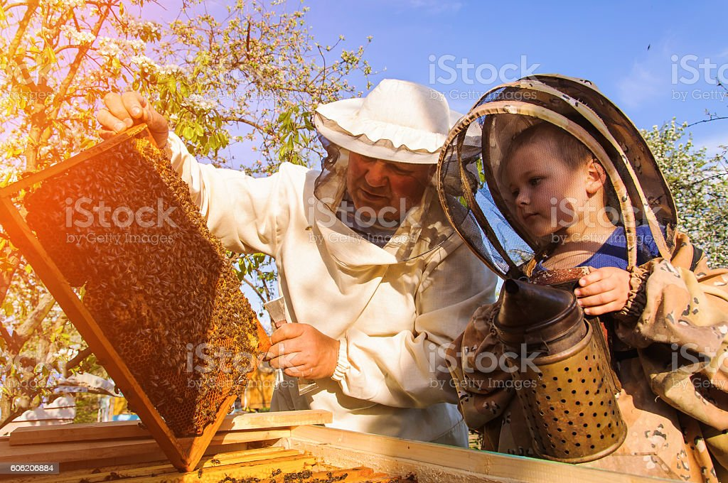 Grandpa beekeeper passes his experience little grandson. stock photo