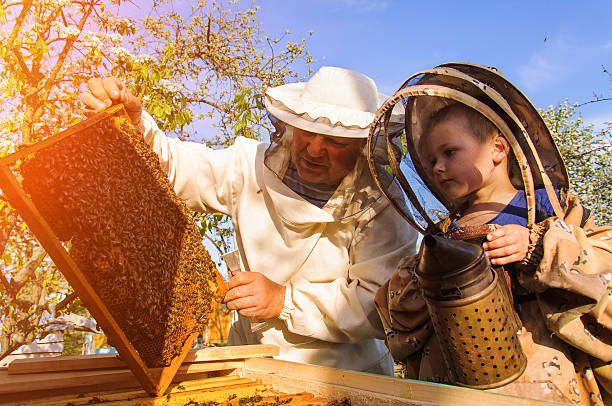 Grandpa beekeeper passes his experience little grandson. - Photo