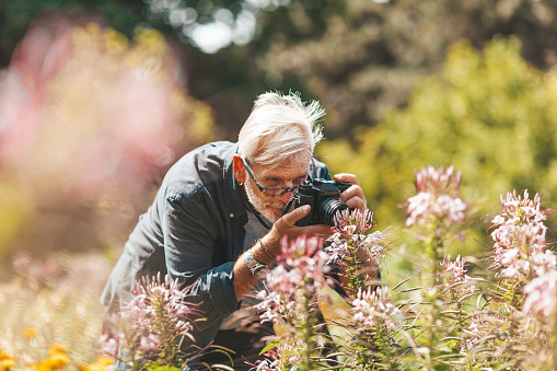 Grandpa takes pictures of flowers outside in sunny weather.