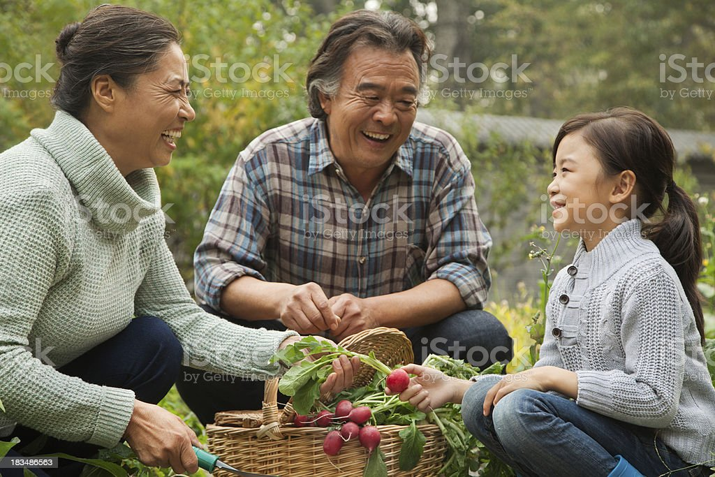 Grandparents and granddaughter in garden stock photo