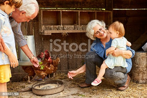 Grandparents showing hens to children. Senior couple spending leisure time with kids. They are at chicken coop.