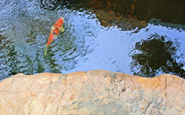 Granite floor At the pond, there are red carp fish swimming. stock photo