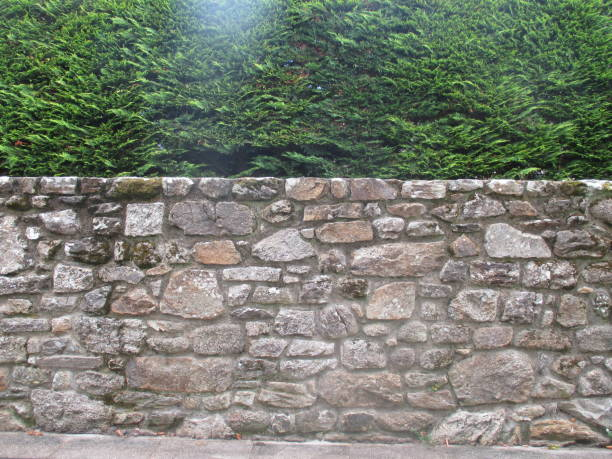 Cтоковое фото Granite Stone Wall and Thuja Fence