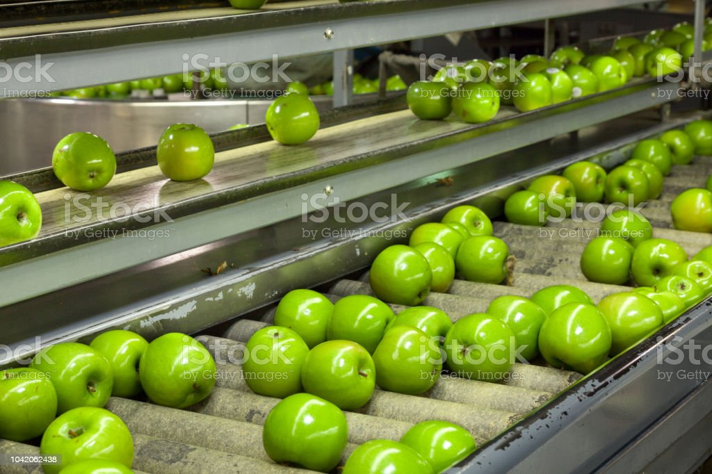 Granny Smith Apples on a sorting table in a fruit packing warehouse stock photo