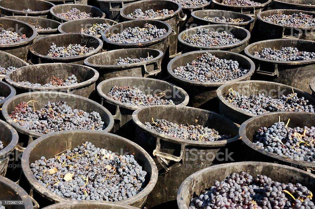 Grape buckets royalty-free stock photo