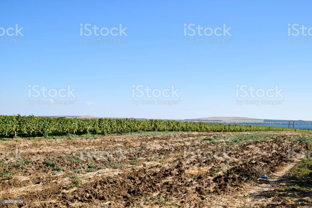 Grape field. Part of the plowed field near the vineyard. stock photo