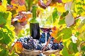 grape harvest bucket with red wine bottle and wine glass in Mediterranean vineyard