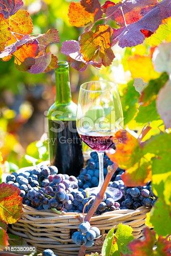 grape harvest bucket with red wine bottle and wine glass in Mediterranean vineyard