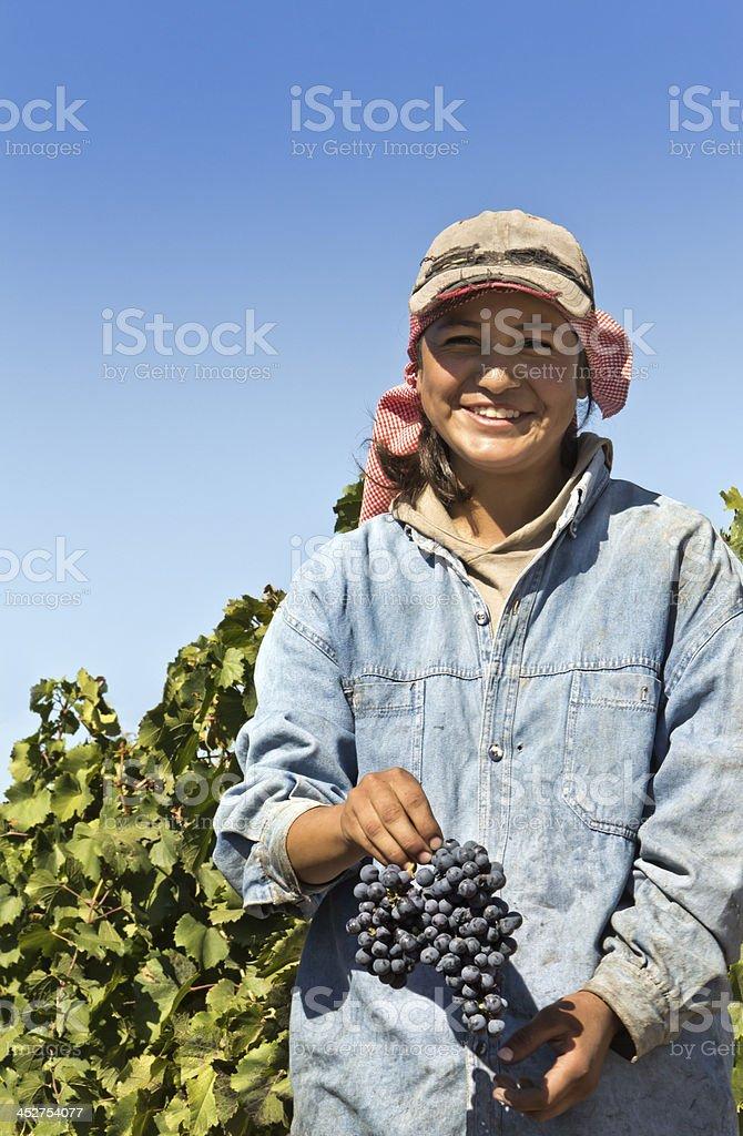 Grape harvester royalty-free stock photo