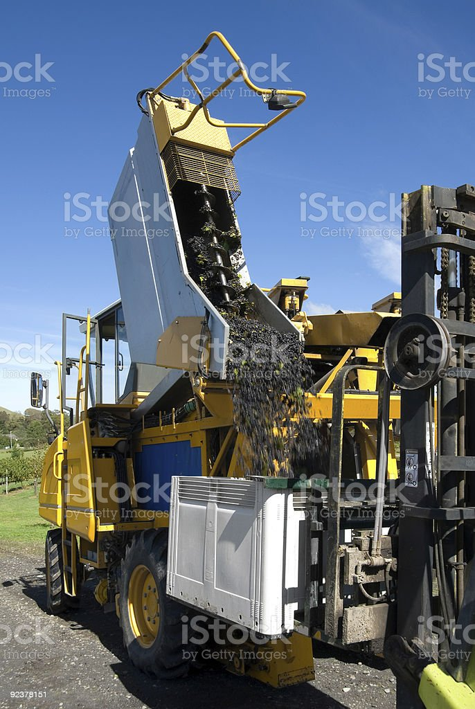Grape Harvester royalty-free stock photo